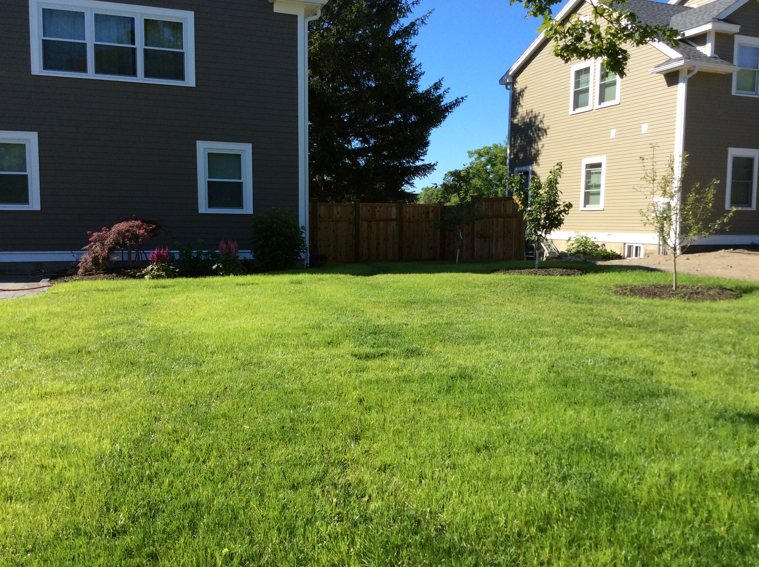 Let us help you maintain your lawn with our lawn maintenance professionals.